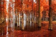 太嫉妒浙江了,3个罕见又美丽的水上森林都被它霸占了
