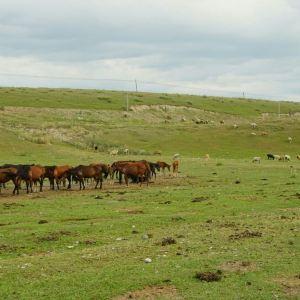 昭苏牧场旅游景点攻略图