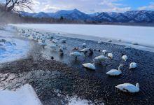 北海道鹤居村雪国观鸟体验2日游