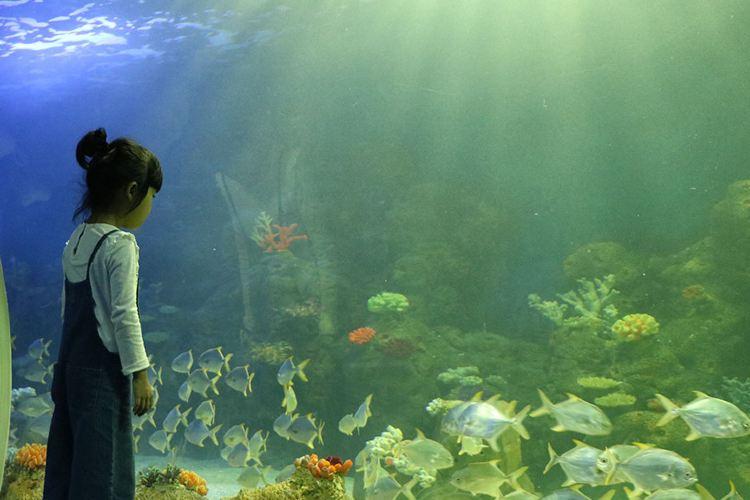 Yueyang Ocean Cubic Marine Park1