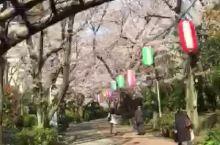 樱花隧道,花海荡漾 4月的日本,新财年开始,新学年开学,新员工入职,......,新生活开始!樱花荡