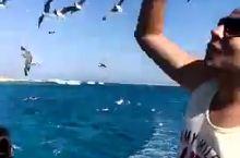 红海看海鸥