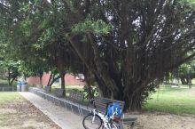 台湾游-新势公园