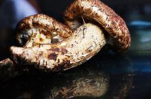 错过这几天 就吃不到的野生蘑菇宴