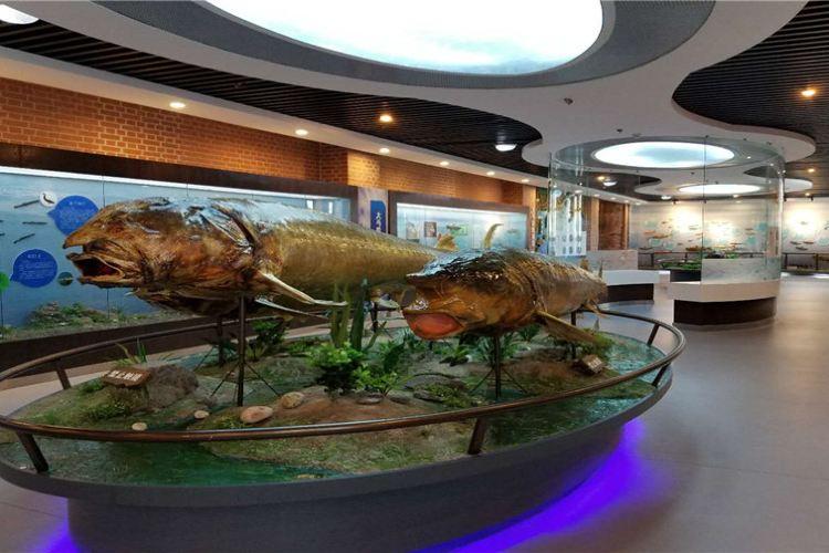 撫遠魚文化體驗館3