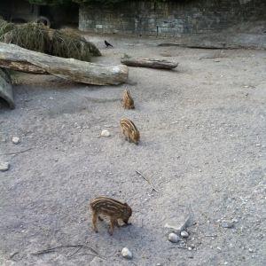 Dählhölzli动物公园旅游景点攻略图