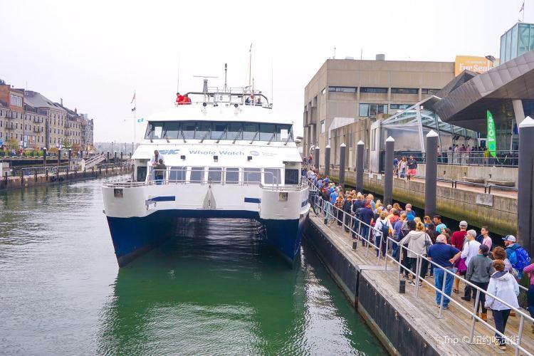 波士頓港遊輪1