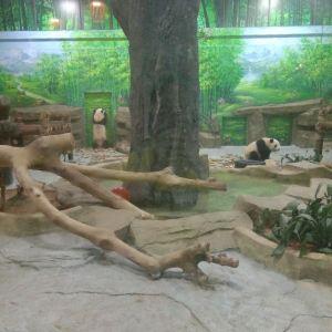 灵玲马戏城旅游景点攻略图
