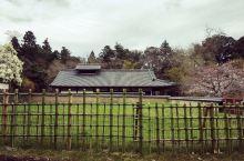 #为祖国庆生#樱花下的奈良公园