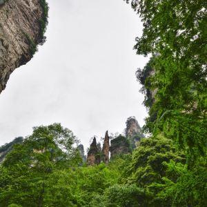 金鞭溪大峡谷旅游景点攻略图
