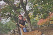 打卡奈良小鹿