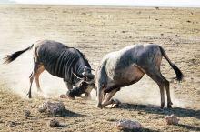 肯尼亚| 闯进现实版的动物世界