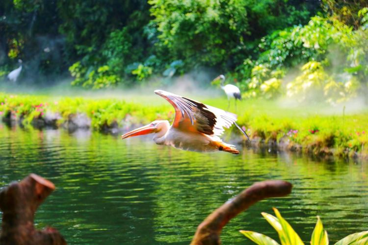 Chimelong Bird Park1