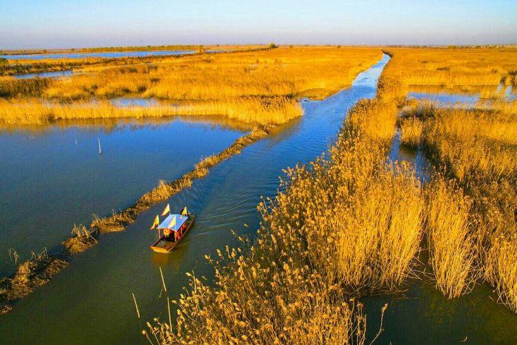 Gaoyou Lake Reed Wetland Park3