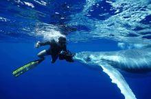 汤加与鲸共舞-天赐鲸喜