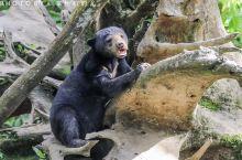 马来西亚山打根西必洛自然保护区