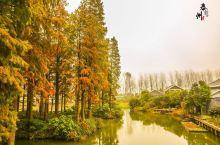 来这里看泰州最美水上森林公园