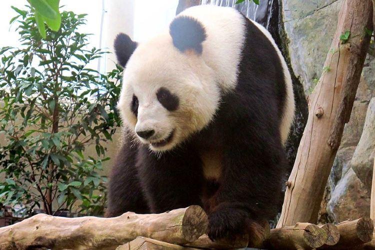 海南熱帶野生動植物園1