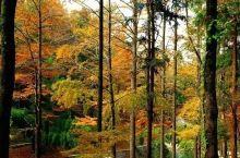 """这里是宁波唯一入选的""""省级首批森林文化小镇""""的乡镇!来玩一圈,不辜负美丽秋色(中奖公布)"""