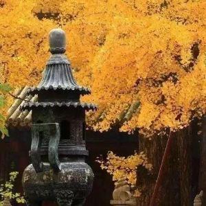 禅林寺风景区旅游景点攻略图