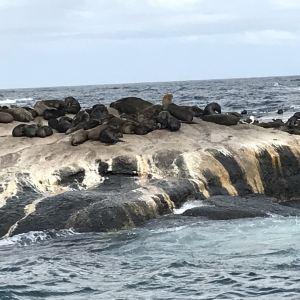 海豹岛旅游景点攻略图