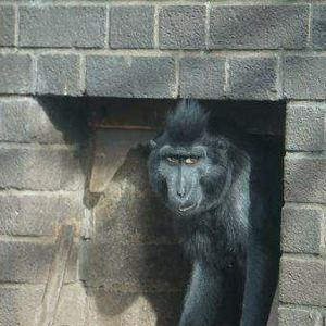 伦敦动物园旅游景点攻略图