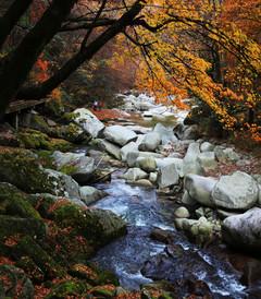 [光雾山游记图片] 爱在深秋