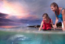 2日布里斯班·喂海豚+抱考拉+观鲸+浮潜