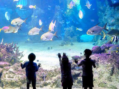 Luoyuan Bay Ocean World