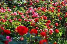 """开州盛山植物园,一步一景,""""花花世界""""等你来"""
