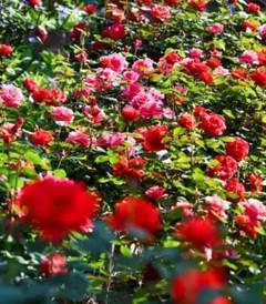 """[开州区游记图片] 开州盛山植物园,一步一景,""""花花世界""""等你来"""