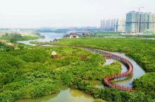 海南澄迈红树林湿地公园