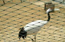 麋鹿和丹顶鹤保护区