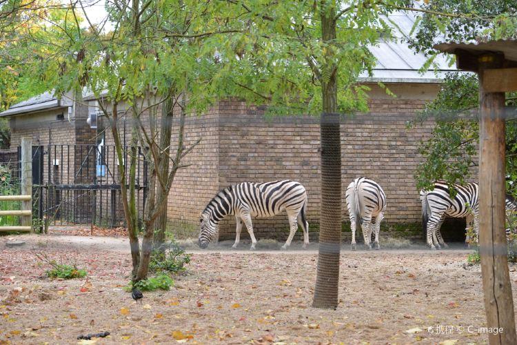 London Zoo2
