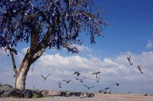 水菱环球之旅の吃土之旅十二站:卡帕多奇亚的鸽子谷