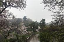 淳朴日式庭院