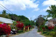 在岛上租倆车,开着在小路上乱窜,会碰到突然冒出的另外的车