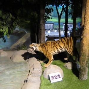 吉林省自然博物馆旅游景点攻略图