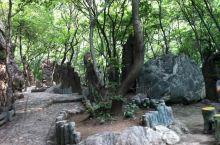 树木茂盛的绵山