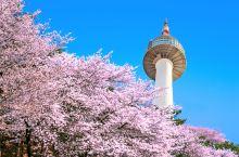 首尔赏樱指南 l 在春天邂逅一场樱花雨