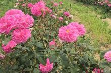 上帝的花园 保加利亚农活记