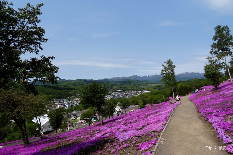 Shibazakura Takinoue Park4