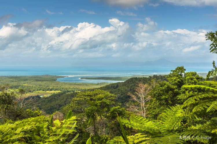 Daintree Rainforest2