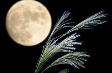 """""""今夜月色很美"""",聊聊风雅的日本中秋节"""