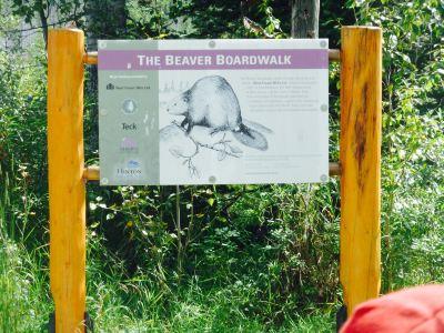 The Beaver Boardwalk
