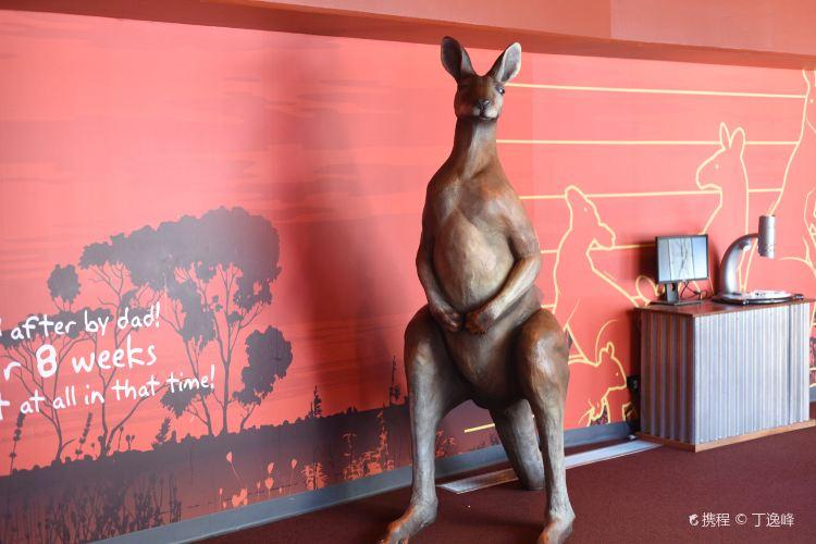 雪梨野生動物園2