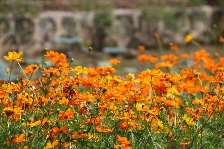 Yuntai Garden3