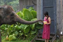 广州长隆野生动物世界最强攻略