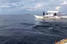薄荷岛追逐海豚🐬