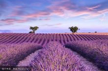 普罗旺斯一生必游,看南法最美薰衣草!